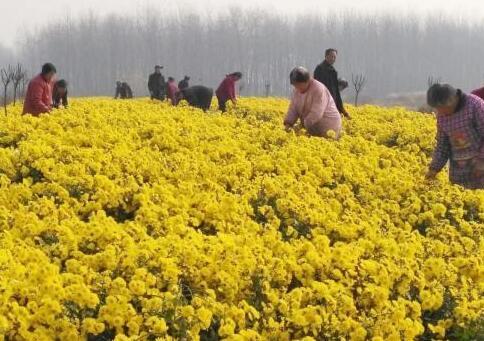 江苏泗阳:产业扶贫助农民门前就业 农房改善描绘小康画卷